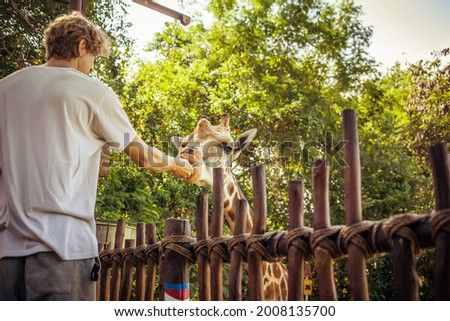 Anonymous caucasian man feeding a friendly giraffe with fresh green vegetables. A funny exotic african animal in a conservation park. Making friends with Mister giraffe on a sunny summer day. Foto stock ©