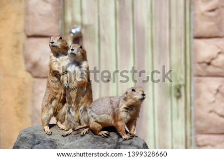 Another group of funny gophers