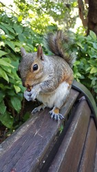 Another Squirrel Upclose on a Cape Town Bench