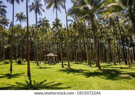 Photo of  Anse des Cascades palm and coconut trees in Sainte-Rose on Reunion Island