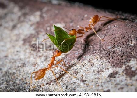 Ant. stock photo