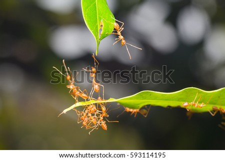 Ant action standing.Ant bridge unity team #593114195