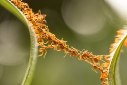 Ant action standing.Ant bridge unity team,Concept team work together