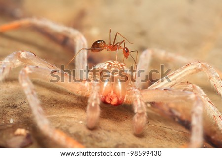 ant and spider cocoon in macro view