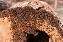 Ant farm. Ants at work.