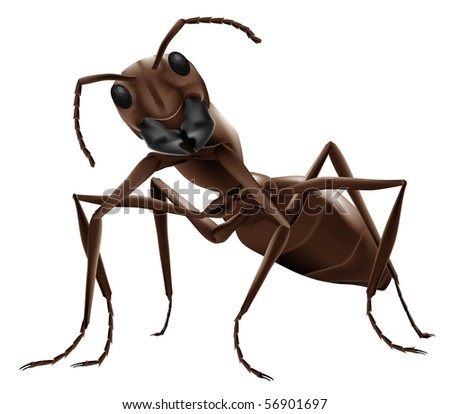 ant illustration close up of small insect isolated on white background
