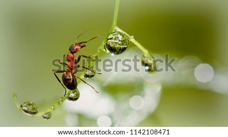 ant on a branch with dew drops #1142108471