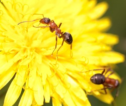 ant on flower