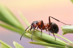 Ant runs quickly in the grass, clinging to the blades of grass.