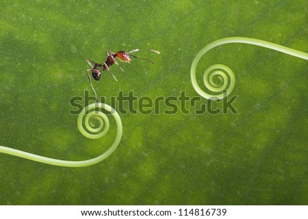 ANT stand on the green plant for adv or others purpose use #114816739