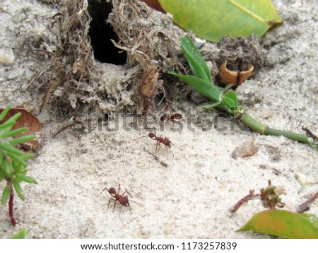 Ant working together tingling formicary                       #1173257839