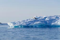 Antarctic landscape, blue ice in sun with crabeater seal, Antarctica