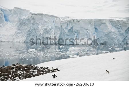 Antarctic landscape with gentoo penguin colony