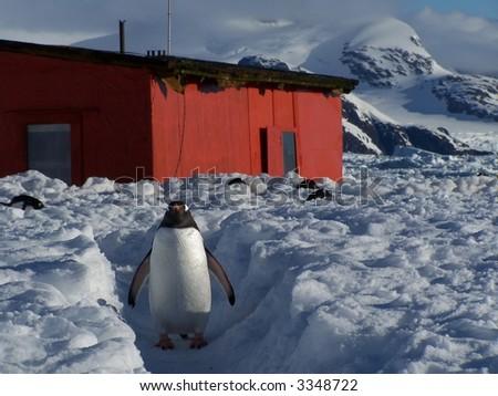 Antarctic penguin in front of a scientific building.