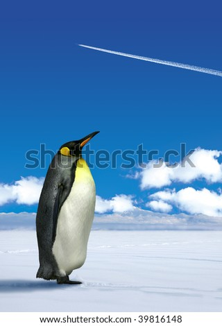 Antarctic penguin wondering white jetplane trace on blue sky background