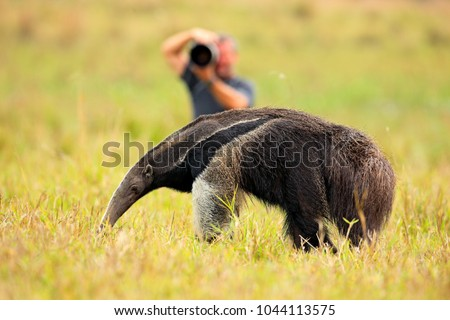 anteater and photographer  cute ...