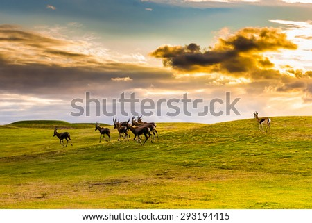 Antelope. South Africa