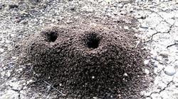 anthill, ant's home inside soil nature wildlife