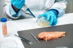 Antibiotics in chicken meat - Food quality inspection in a laboratory. Scientist examining poultry meat for the presence of residues of antibiotics