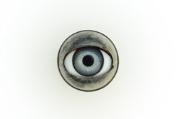 antique blue doll's eye, on white background