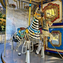 Antique carousel zebra on a merry go round that has plastic sheeting between animals to meet Covid-19 protocol requirements
