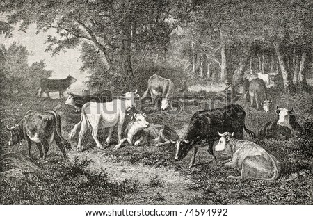 Antique illustration of a herd grazing in the wood. Drawing of Van Marcke, published on L'Illustration, Journal Universel, Paris, 1868
