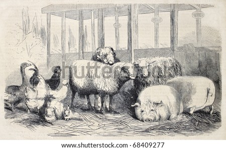 Antique illustration of farm animals. Original, from drawing of Lambert, published on L'Illustration, Journal Universel, Paris, 1860