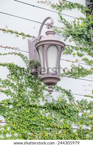 Antique Outdoor Wall Lamp surrounded by green leaves