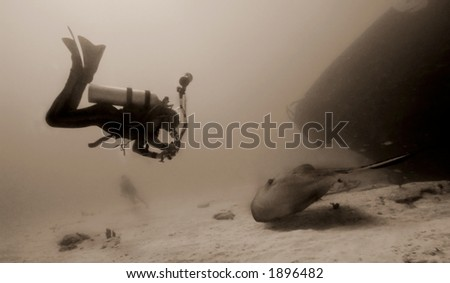 Antique sepia image of Underwater photographer engaging a giant stingray off a wreck in the British Virgin Islands