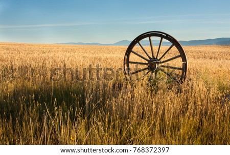 antique wooden wagon wheel with metal rim standing upright in a field of wheat located in eastern Montana