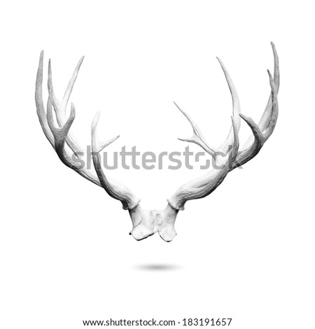 Antler replicas made of cement isolated on white background with clipping path