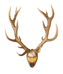 Antlers from a huge stag mounted on wood board, weight over 7 kilos, hunted in 1898