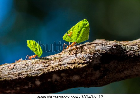 Ants are carrying on leaves stock photo