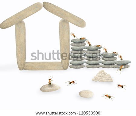 Ants build their own houses.