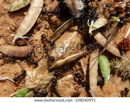 Ants building at their nest
