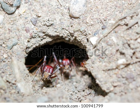 Ants digging their nest