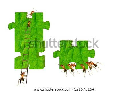 Ants organizations to complete a large puzzle.