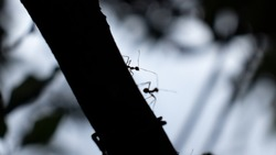 Ants silhouette in the dark tree trunk close up