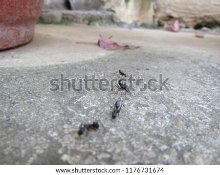 Ants Walk line #1176731674