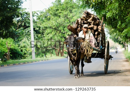 ANURADHAPURA SRI LANKA DEC 6 Local man rides bull vintage cart with firewood on Dec 6 2011 in Anuradhapura Sri Lanka Bulls are traditional nature cargo transport in Sri Lanka