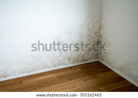 apartment room with mildew and mold problem on the white wall