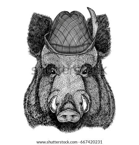 aper  boar  hog  hog  wild boar ...