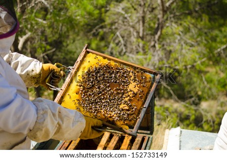 Apiarist in protective work wear holding a beehive