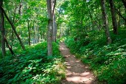 Appalachian Trail (AT) trail marker - white blaze - in Shenandoah National Park, Virginia Near Hightop Mountain Shenandoah National Park holds 101 miles of Appalachian Trail. Trail through green woods