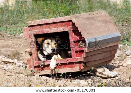 appeasing dog in an inverted wooden red hut on a sunny day in summer