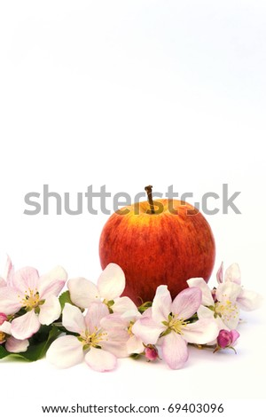 Apple and apple tree blossoms - isolated