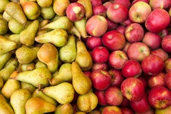 apple and pear fruit in season