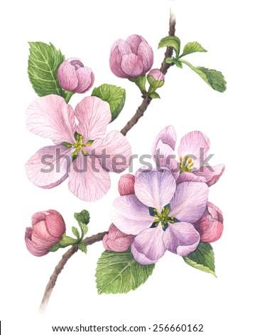 1366x768 apple logo flower - photo #39