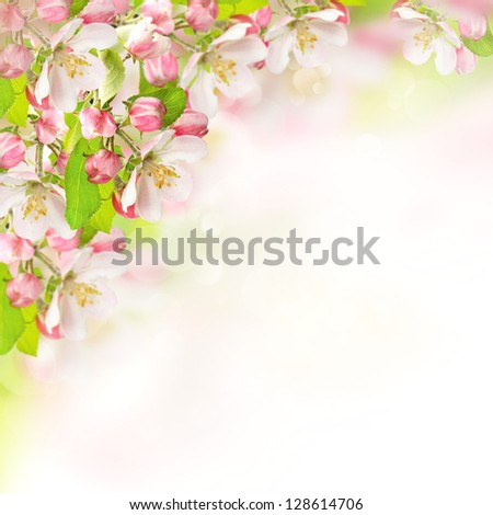 apple blossoms over blurred nature background. spring flowers