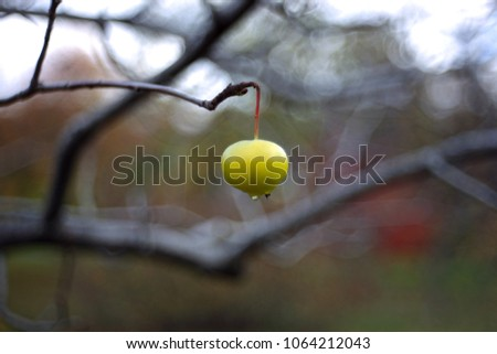 Apple. Branch of apple trees. Background with apple in autumn day. Selective focus and bokeh. Apple tree over nature background. Autumn background.  #1064212043